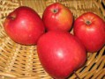 Pommier-Calville-rouge-d-automne.jpg